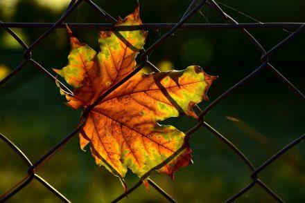 Les estimations essentielles avant la pose une clôture treillis